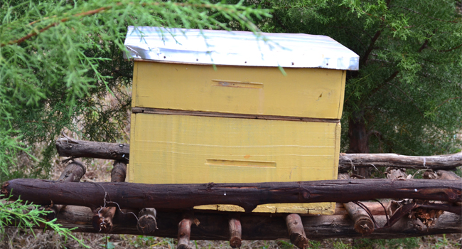 Farming Beehives
